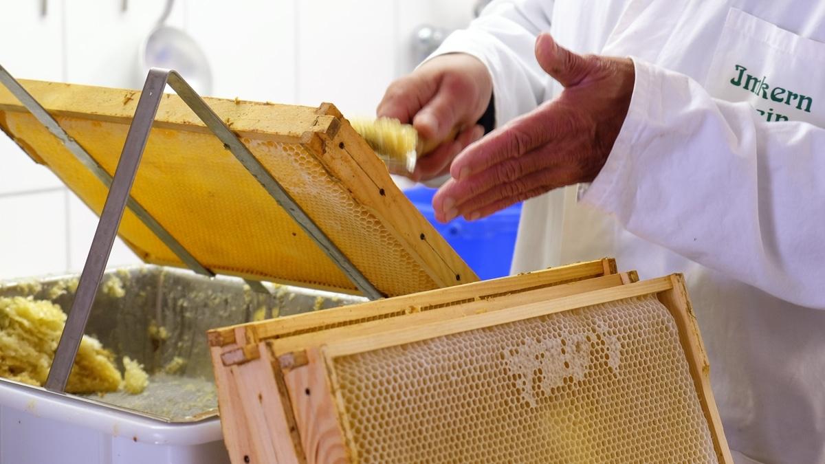 Imker Schlicht entdeckelt Bienenwaben per Hand.