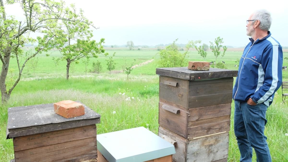 Imker Holger Schlicht steht vor einer Reihe von Bienenkästen und blickt über die Rügener Landschaft.