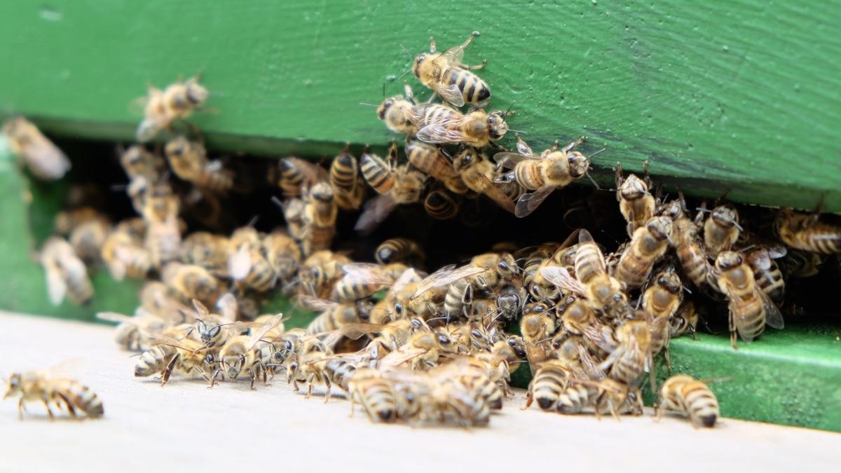 Bienen fliegen aus einem grün gestrichenen Bienenstock ein und aus
